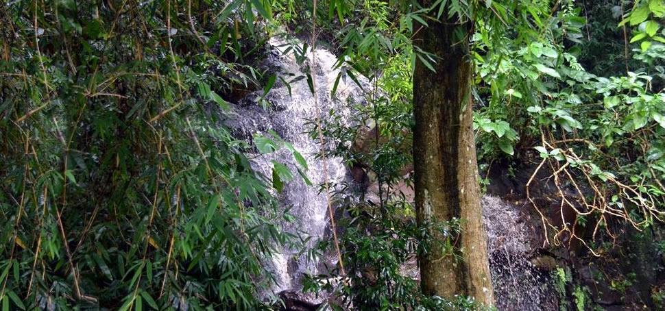 O Sitio Natureza Sanadora é um espaço holístico de luz, a serviço do céu e em benéfico da saúde do ser.